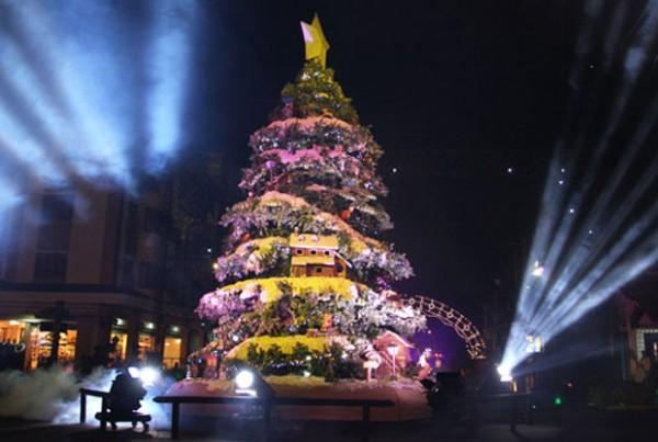 Árvore de 8m de altura em Gramado (RS).