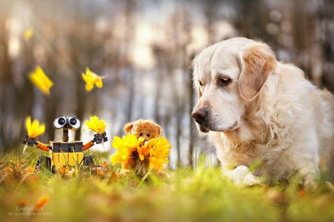 Relação Homem e Cachorro